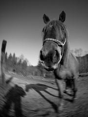 Koníkofka, pohybofka a tieňofka