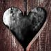 Šedá láska