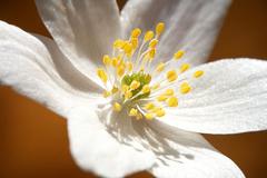 otvorená jari I