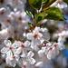 Jar v rozkvete