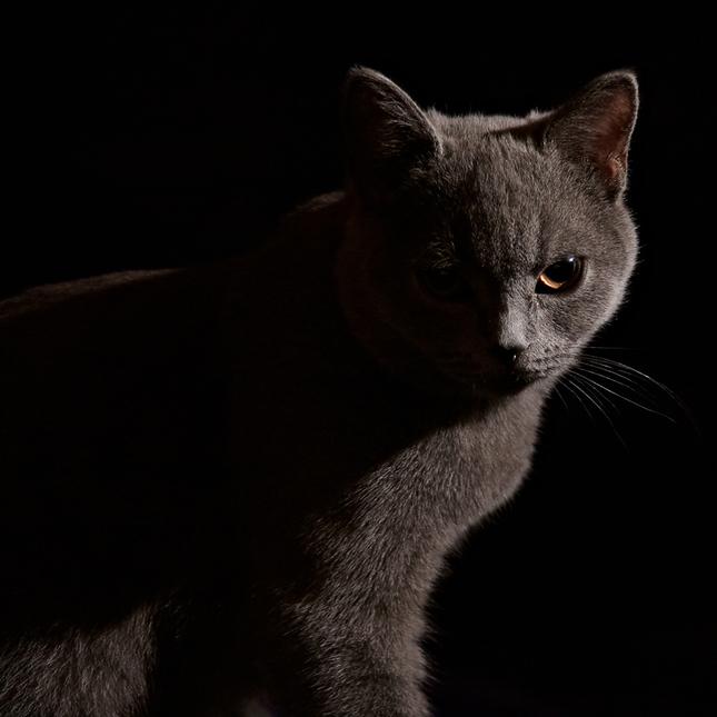 útok z tmy