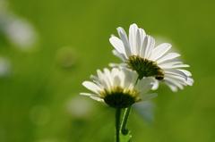 Bielo-zelená