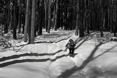 Do hlbokého lesa