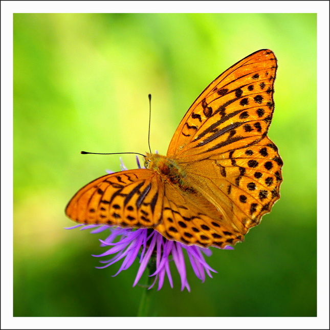 Motýľ leta