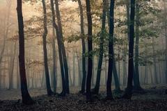 Jesenný les 4