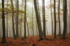 Jesenný les 3
