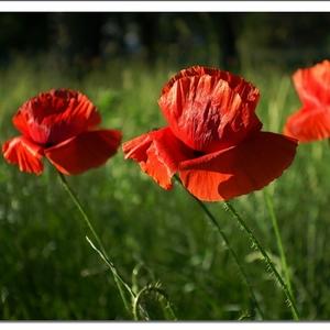 Kvetinky,rastlinky