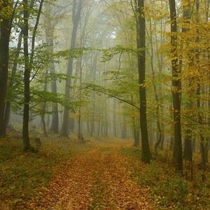 Jesenný les 2