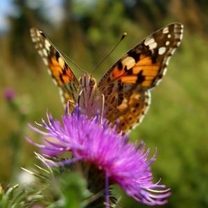 Motýle a iný hmyz