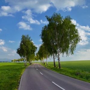 Brezová cesta