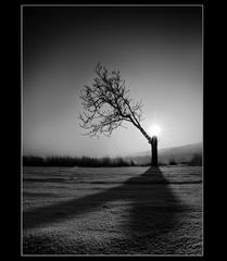 Príbeh stromu- klamanie telom