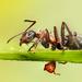 Mravčie tragédie- po útoku