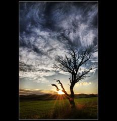 Príbeh stromu- ranné hrátky