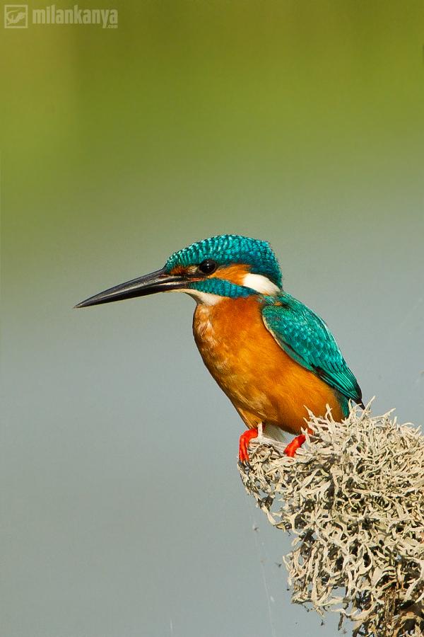 rybárik zp Srí Lanky