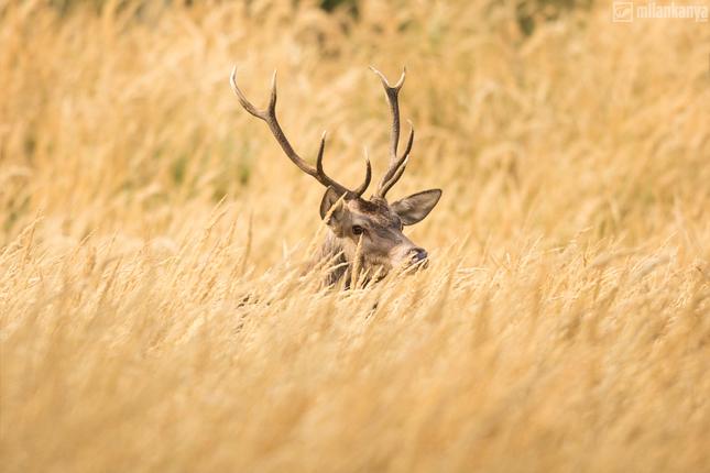 v suchej tráve