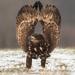 orlia kreacia