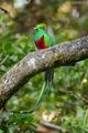 Quetzal v celej kráse