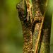 príšera z pralesa 2