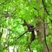 Veverička na konári
