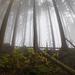 Prales mlhy