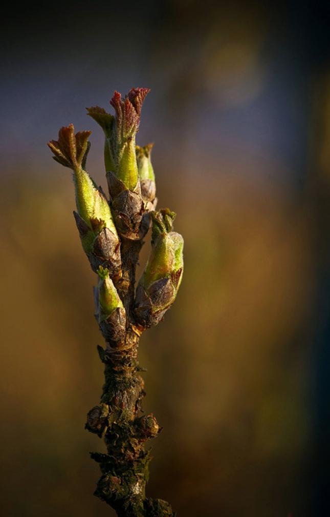 Jarní porost