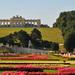 Schonbrunn 3