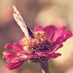v ružovom sne...