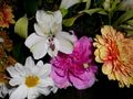 farebne kvety
