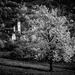 Ceresnove sady v Brdarke