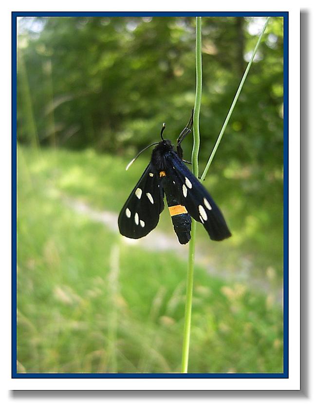 Motýlik:)