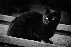 košická cica