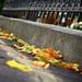 jesenná ulica