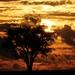 strom samotár  2