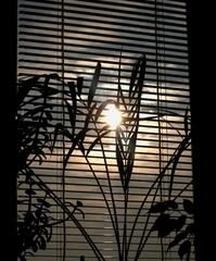 Skúpe slnko