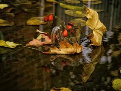 Načapovaná jeseň