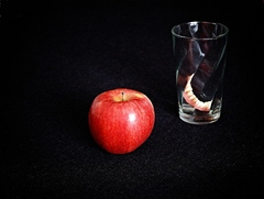 Zakázané ovocie