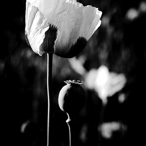 Kvet a plod