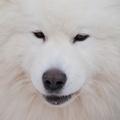 Pes, ktorý je (žerie) sám II