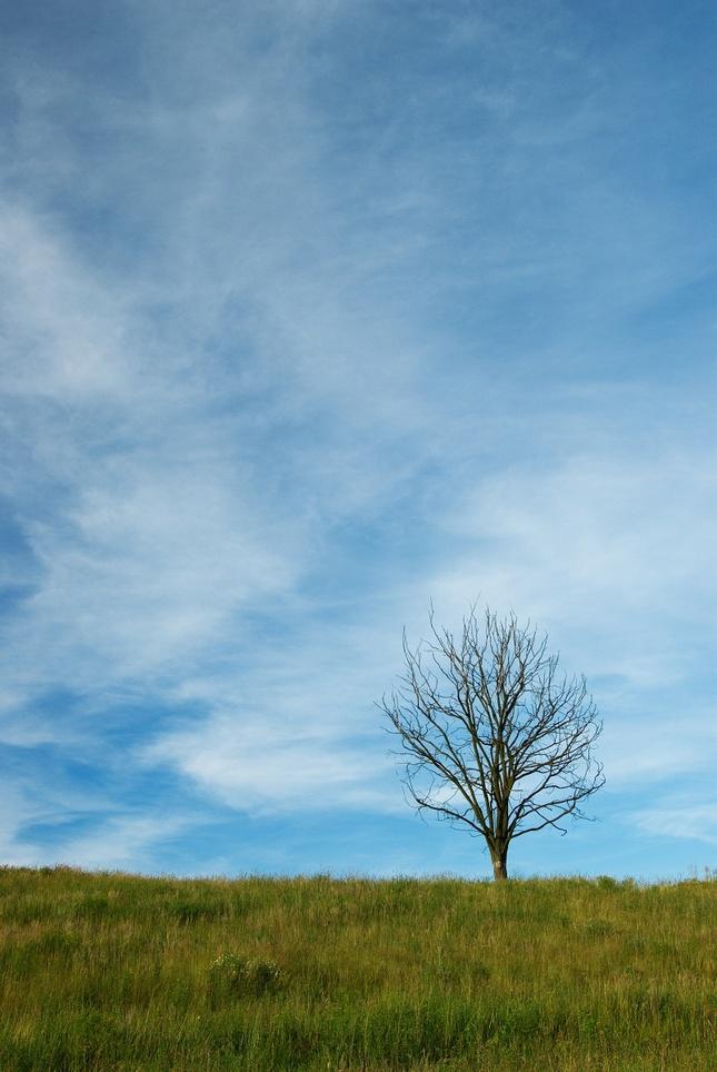 Pod modrou oblohou
