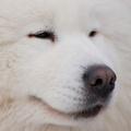 Pes, ktorý je (žerie) sám I