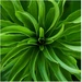 Zelený vír života