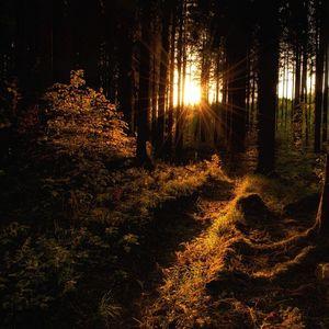 lesnou cestičkou