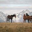 Tatranske kone