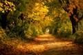 Jesennou cestičkou