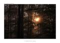 v temnote lesa