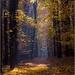 sviežosť lesa