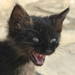 Zúrivá mačka