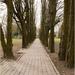 chodník lemovaný stromami