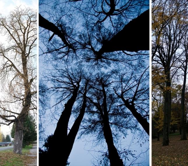 Stromy v SNV