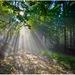 ..v magickom lesíku I...